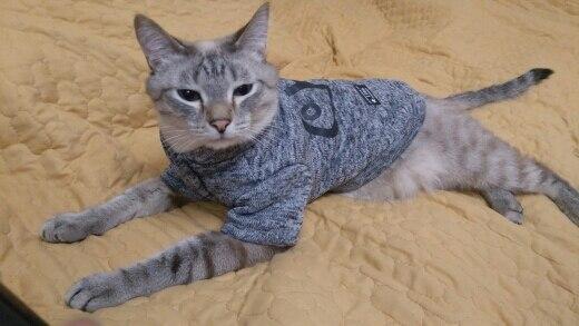 Kedi kazağı hep21.com
