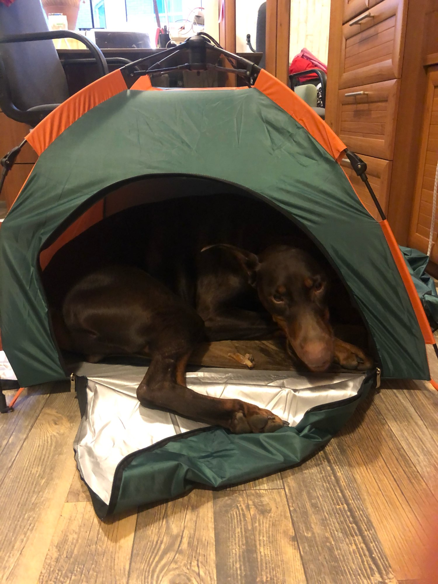 DogMEGA Camping Tent for Dogs | Waterproof | Foldable photo review