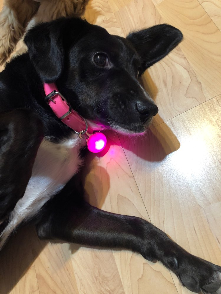 Night Safety Dog Collar Glowing Pendant LED Flash Lights Pet Leads Accessories Glow In The Dark Bright Necklace Dog Collar