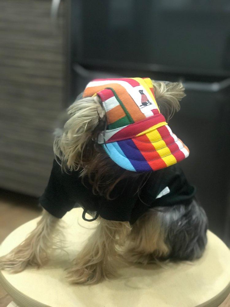 Dog Cap | Dog Baseball Cap | Dog Sun Cap photo review