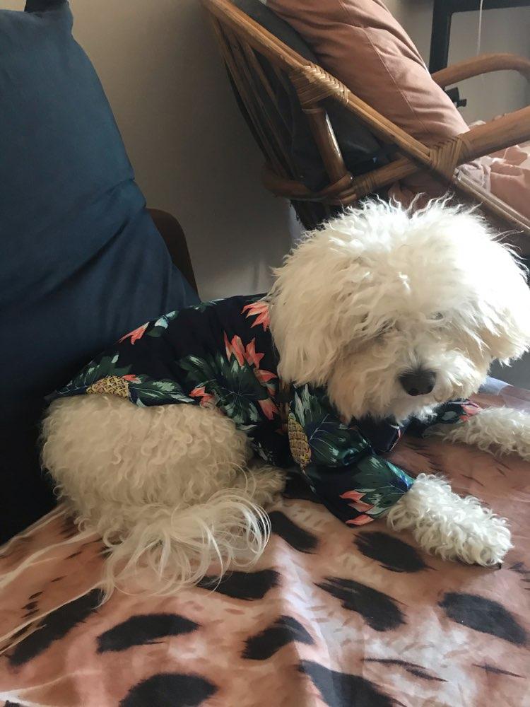 MEGA Dog Hawaiian Shirt | Dog Shirts | Dog Clothes photo review
