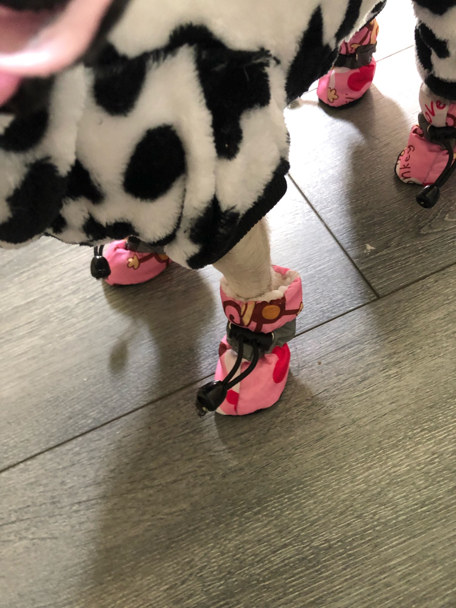 Waterproof Anti-Slip Boots | Boots for Small Medium Dog photo review