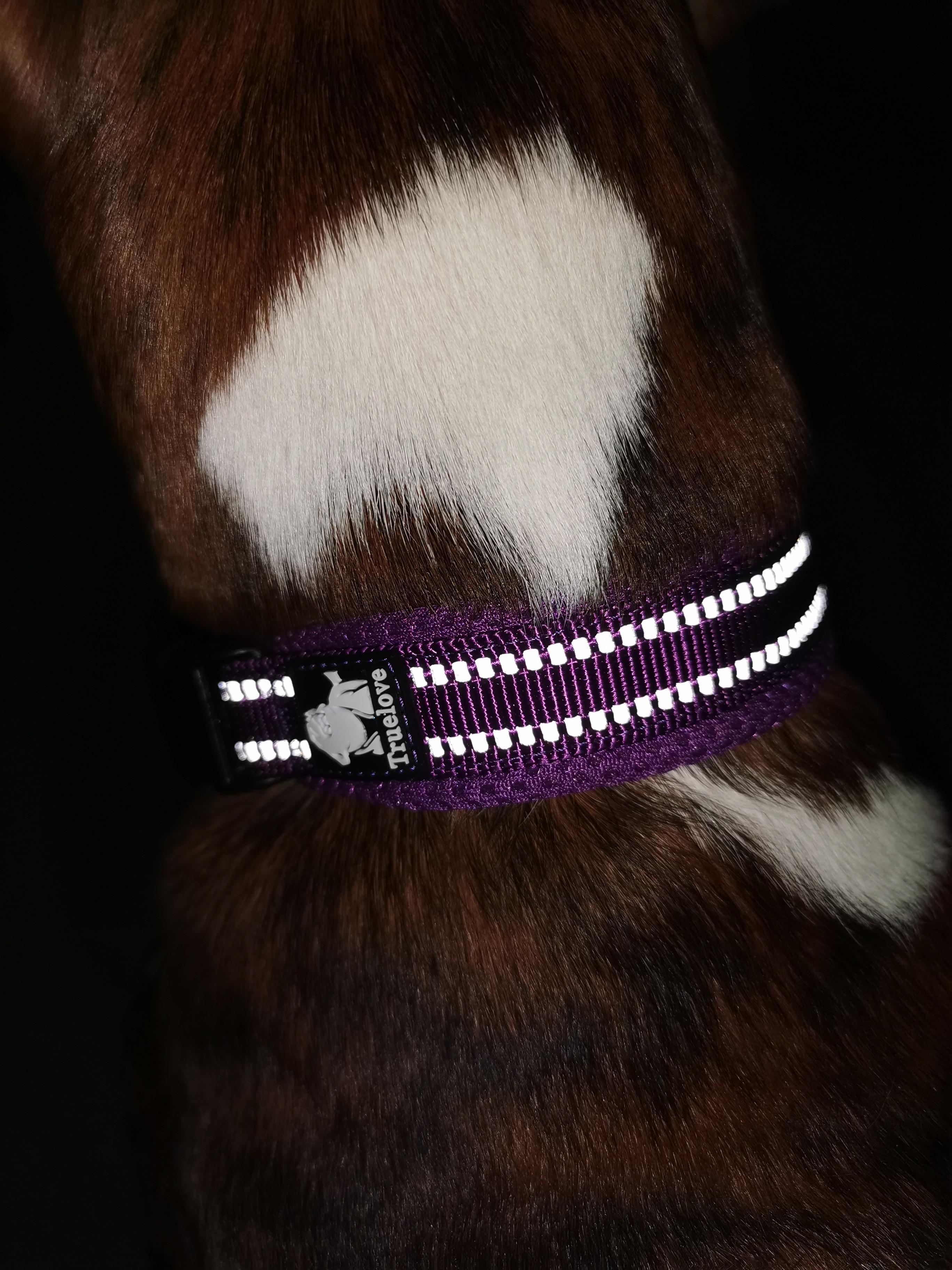 tasma köpek