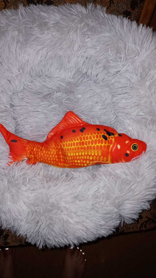 Jumping Fish Interactive Dog Toy photo review