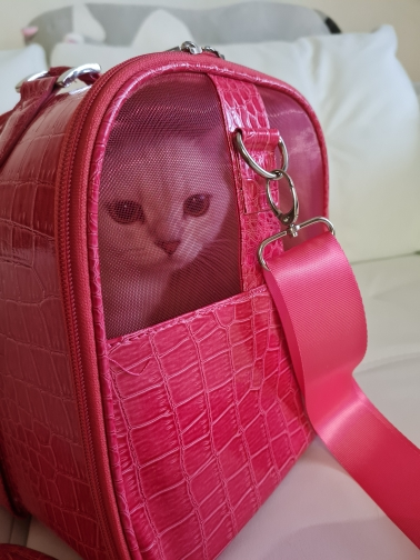 DogMEGA Small Dog Carrier Purse   Pet Carrier Bag   Cat Carrier Purse photo review