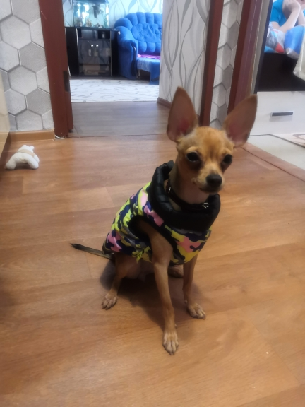 Waterproof Dog Clothing Vest Apparel photo review