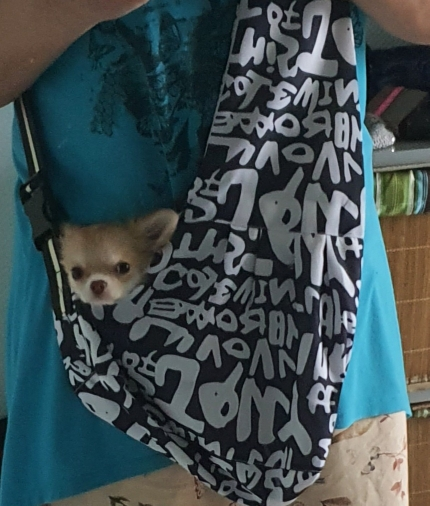 DogMEGA Dog Carrier Sling | Puppy Sling | Pet Sling Carrier photo review