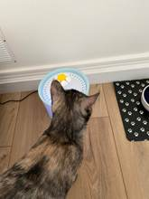 I received the fountain very quickly I started it immediately after washing it. My cat ask