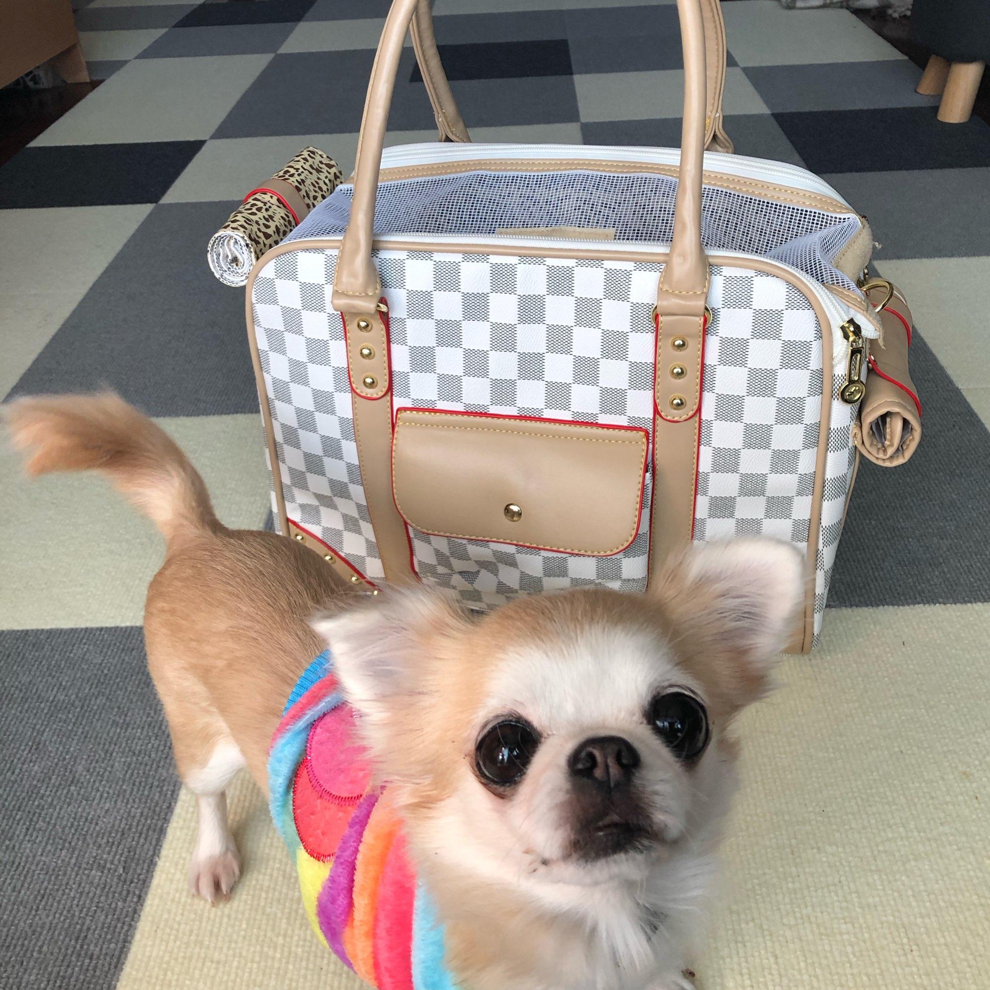 DogMEGA Dog Carrier Backpacks | Dog Travel Carrier | Dog Carrier Backpack Airline Approved photo review