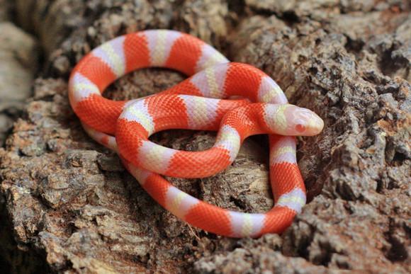 蛇能养出感情吗?这篇科普文告诉你答案~