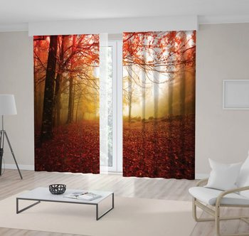 Curtain in the Autumn Gerês National Park in Portugal Forest Trees Red Leaves Mystic Morning View Brown Beige
