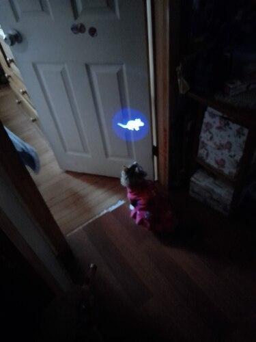 Cat Laser Toy Pen photo review