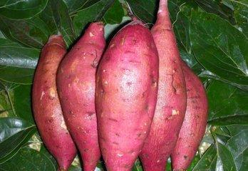 红薯作为粗粮多吃可以预防糖尿病吗-养生法典