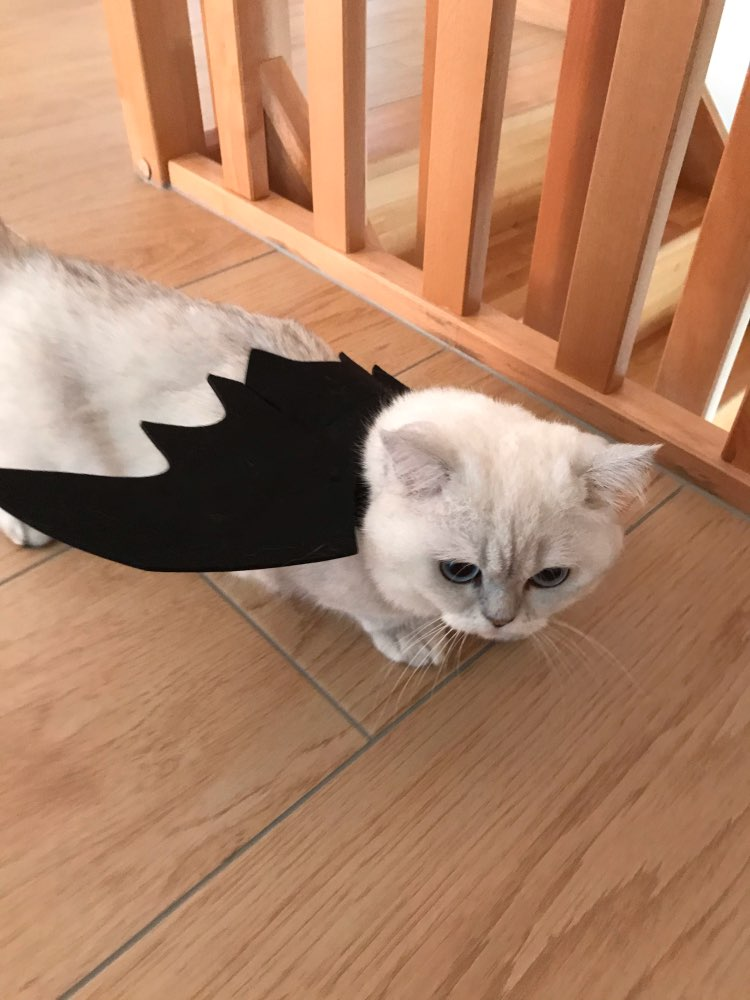 Cute Halloween Cat Costume Small Pet Cat Bat Wings Halloween Cat Wings Hallowen Cat Accessories 2018 Halloween Decorations