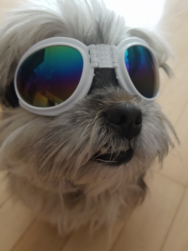 DogMEGA Foldable Dog Sunglasses UV Protection photo review