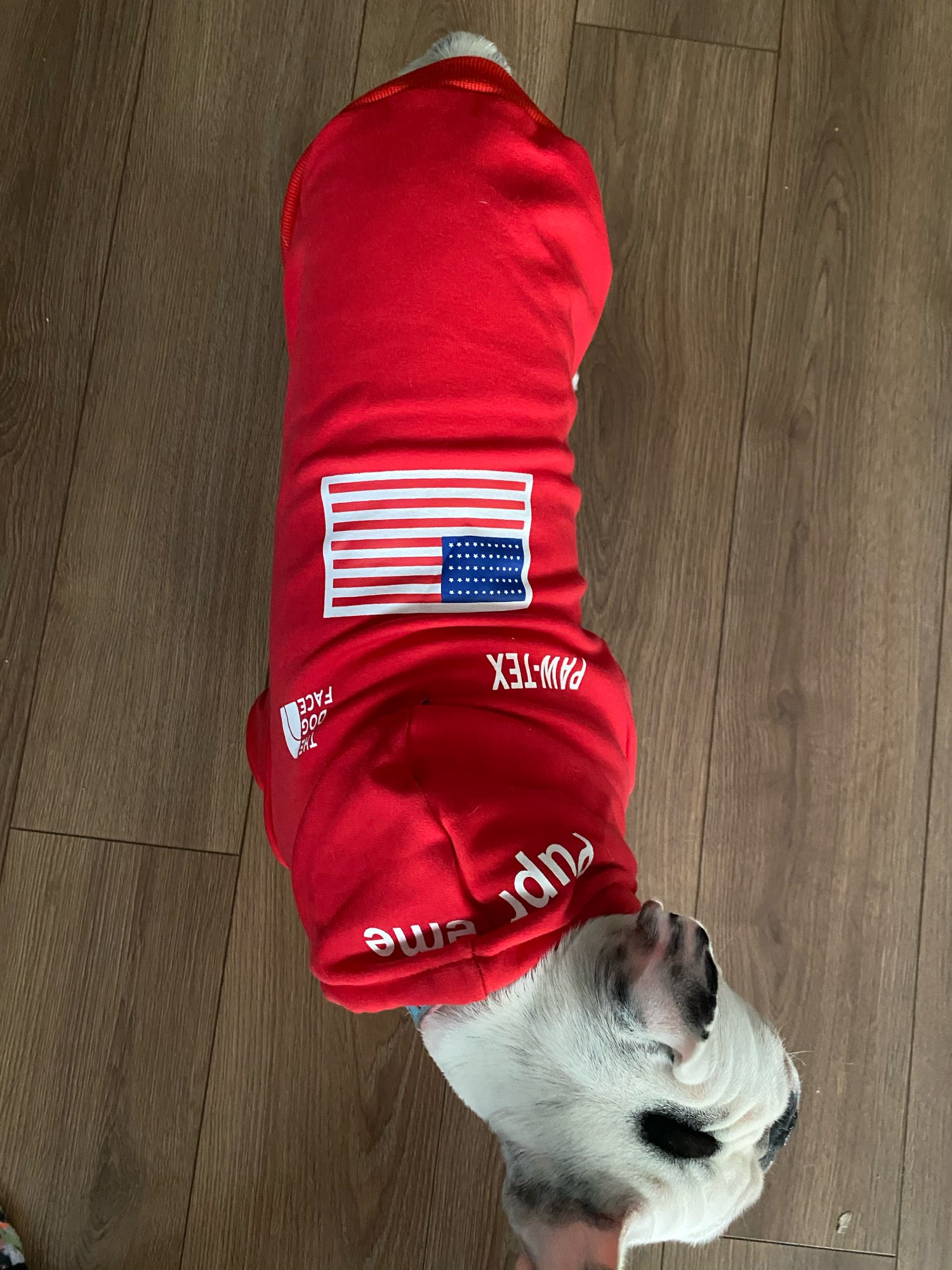 Red Pupreme Dog Jumper photo review