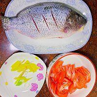 红烧番茄鱼的做法图解2