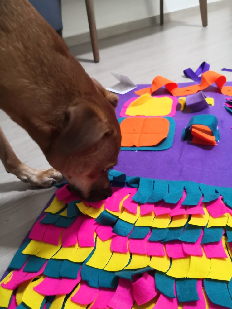 Snuffle Mat   Snuffle Mat for Dogs   Best Snuffle Mat for Dogs photo review