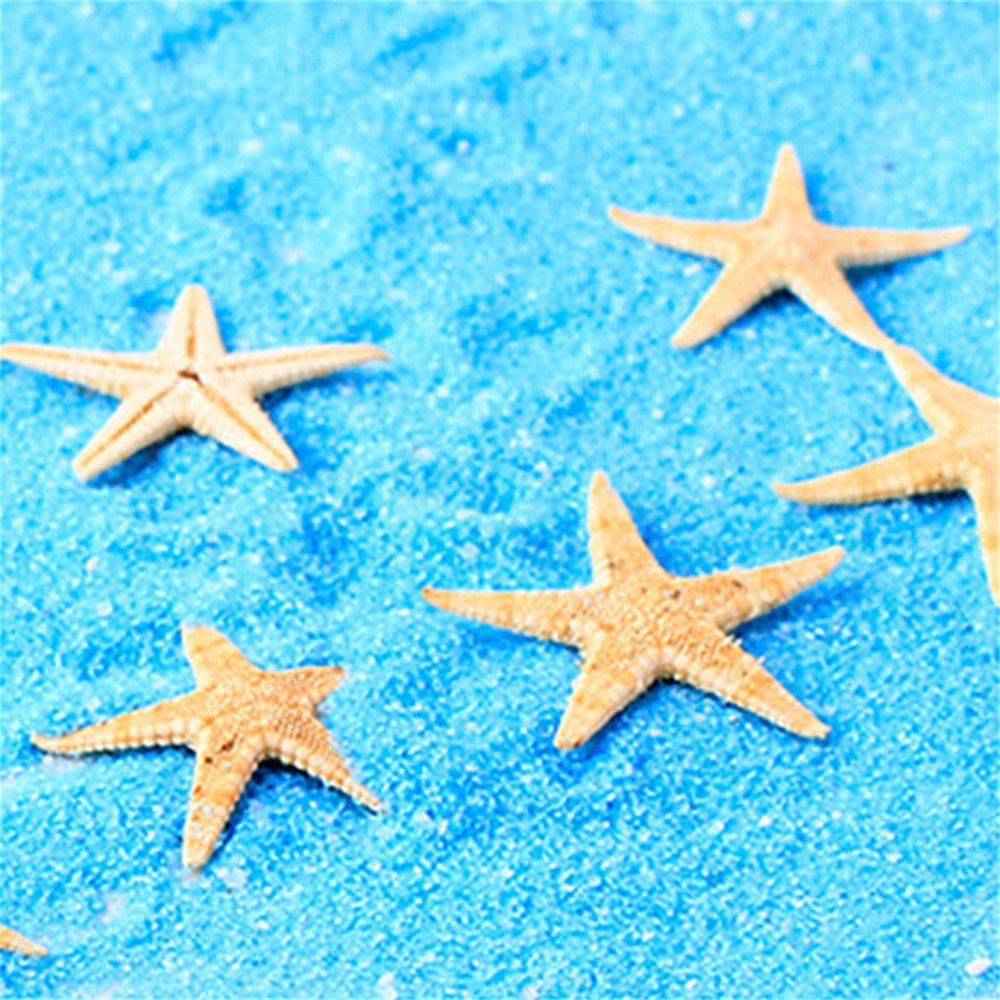 100pcs Mini Cute Small Mini Starfish Sea Star Shell Beach Home Decor DIY Craft