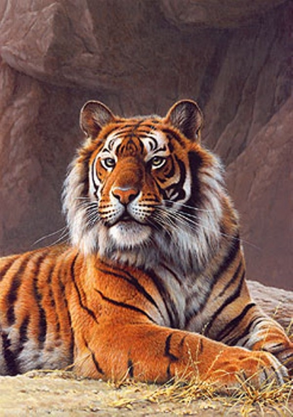 Painting By Numbers Raw Tiger, 40x50 Cm