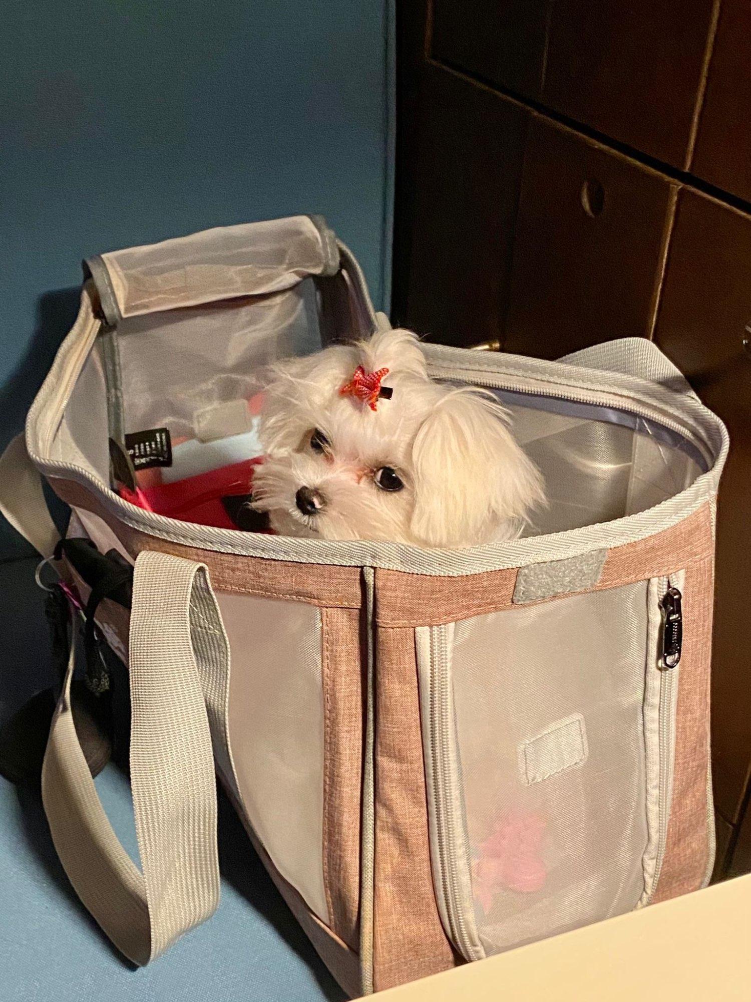 DogMEGA Dog Tote Bag   Small Dog Tote Bag   Dog Travel Tote photo review