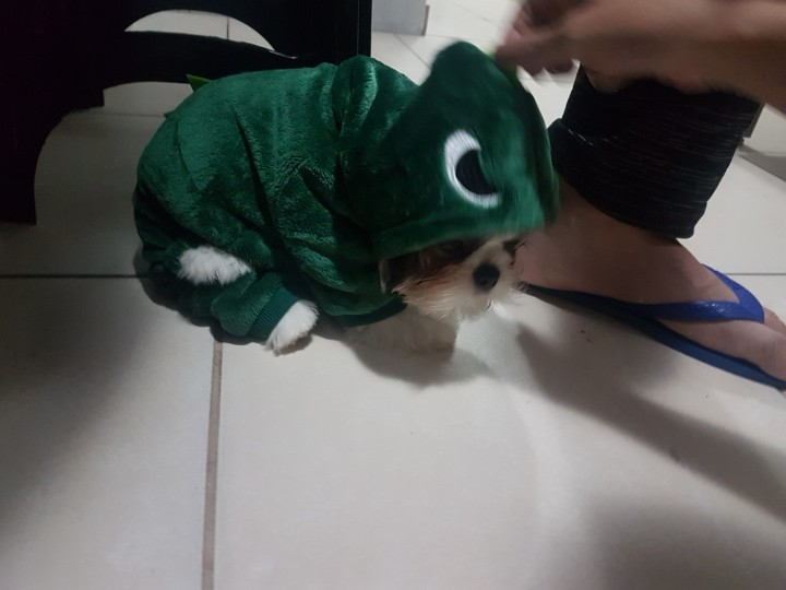 MEGA Dragon Dog Hoodie | Dog Dragon Costume | Dog Dinosaur Costume photo review
