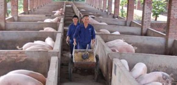 10月18:涨势再起!16省猪价大涨,养猪人的好日子又来了插图(3)