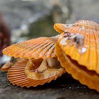 芝士烤加拿大北极虾扇贝的做法图解3