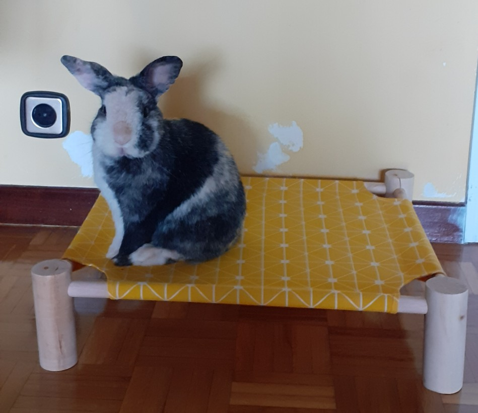 Small Elevated Dog Bed | Raised Dog Bed | Dog Cot Bed photo review