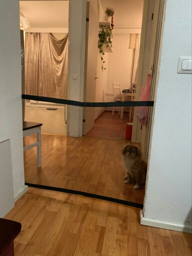 Mesh Dog Gate | Dog Gate for Stairs | Puppy Gate | Magic Gate for Dogs photo review