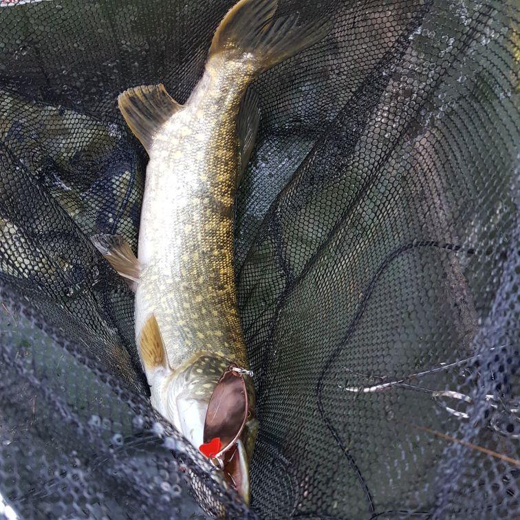 Varas de pescar rápido rápido bastão