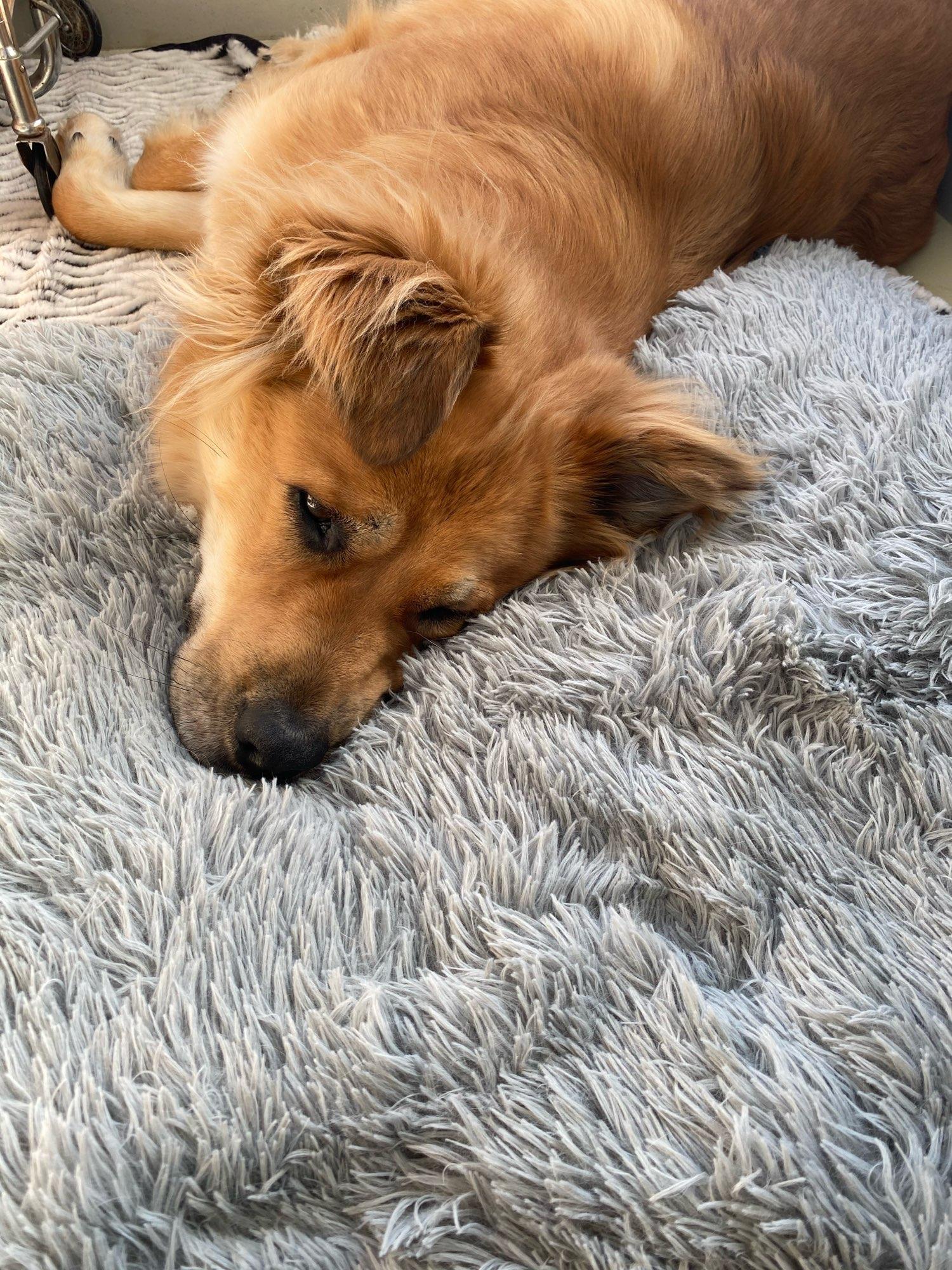 Köpek Yatağı