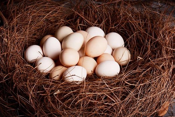 鸡蛋吃多了有哪些弊端-养生法典