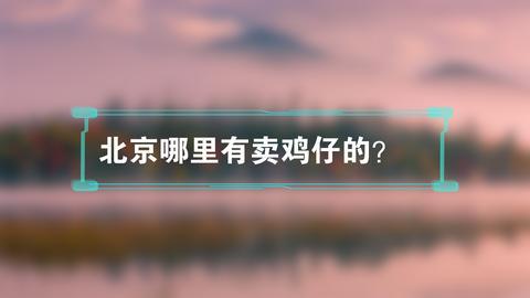 北京哪里有卖鸡仔的?