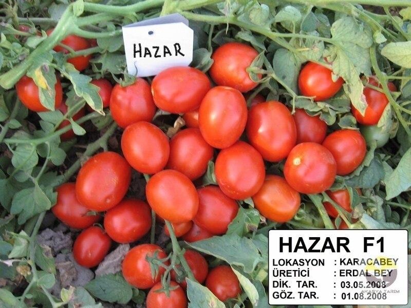 Hazar F1 Salçalık Domates Tohumu 2.500 Adet Seed Disseminators     - title=