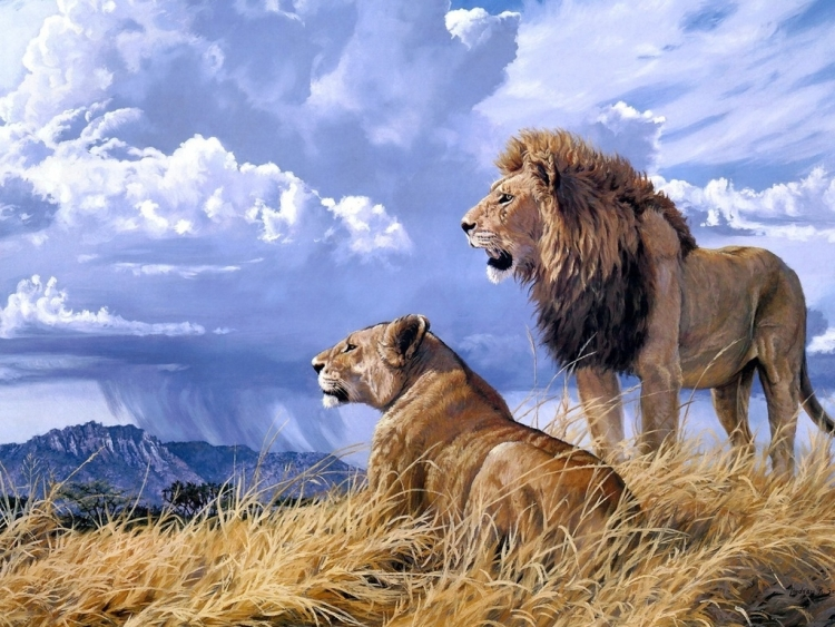 Painting By Numbers Leo And Lion, 40x50 Cm