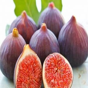 20 Pieces Rare Black Figs Free Shipping