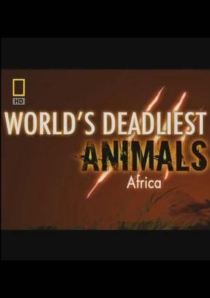 世界致命动物:非洲
