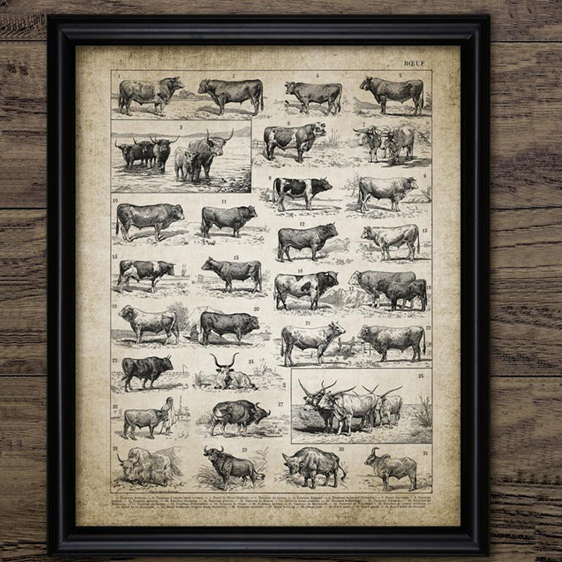 Canvas Painting Picture Ranch Cattle Farming Vintage Poster Bull Wall-Art Print Home-Decor title=