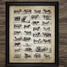 Arte antiguo de la granja del ganado de la vaca de la impresión del arte de la pared de la cría de la vaca pintura de la lona cuadro decoración del hogar