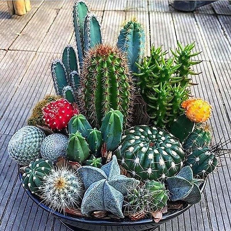 Cactus seed mixture.  Seeds of ...