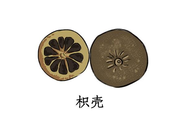 枳壳的功效与作用-养生法典