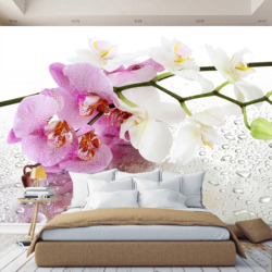 3D wall mural wallpaper orchid flowers, custom wallpaper, for Hall, kitchen, bedroom, childrens, wall mural expanding space