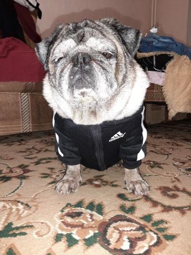 Addidog Fashion Fleece Jacket photo review