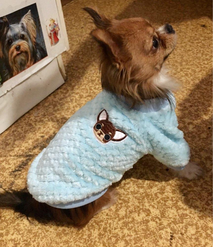 Köpek kazağı