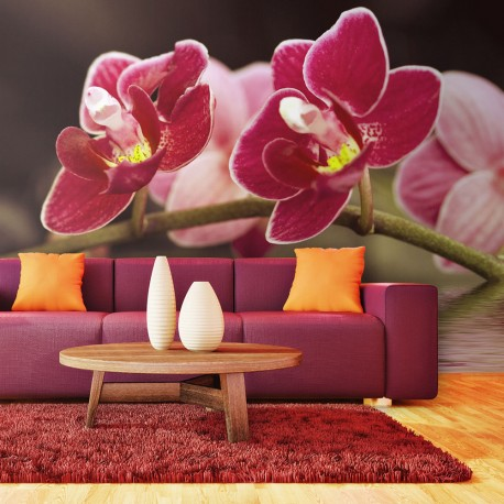 Photo Wallpaper-Orchid Delicate In The Water