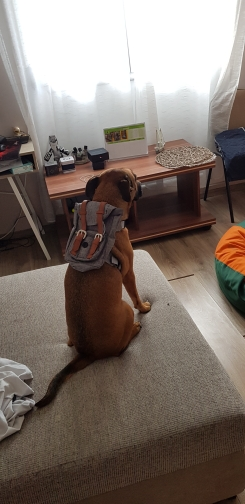 Classic Dog Backpacks   Best Dog Backpack   Small Dog Backpack photo review