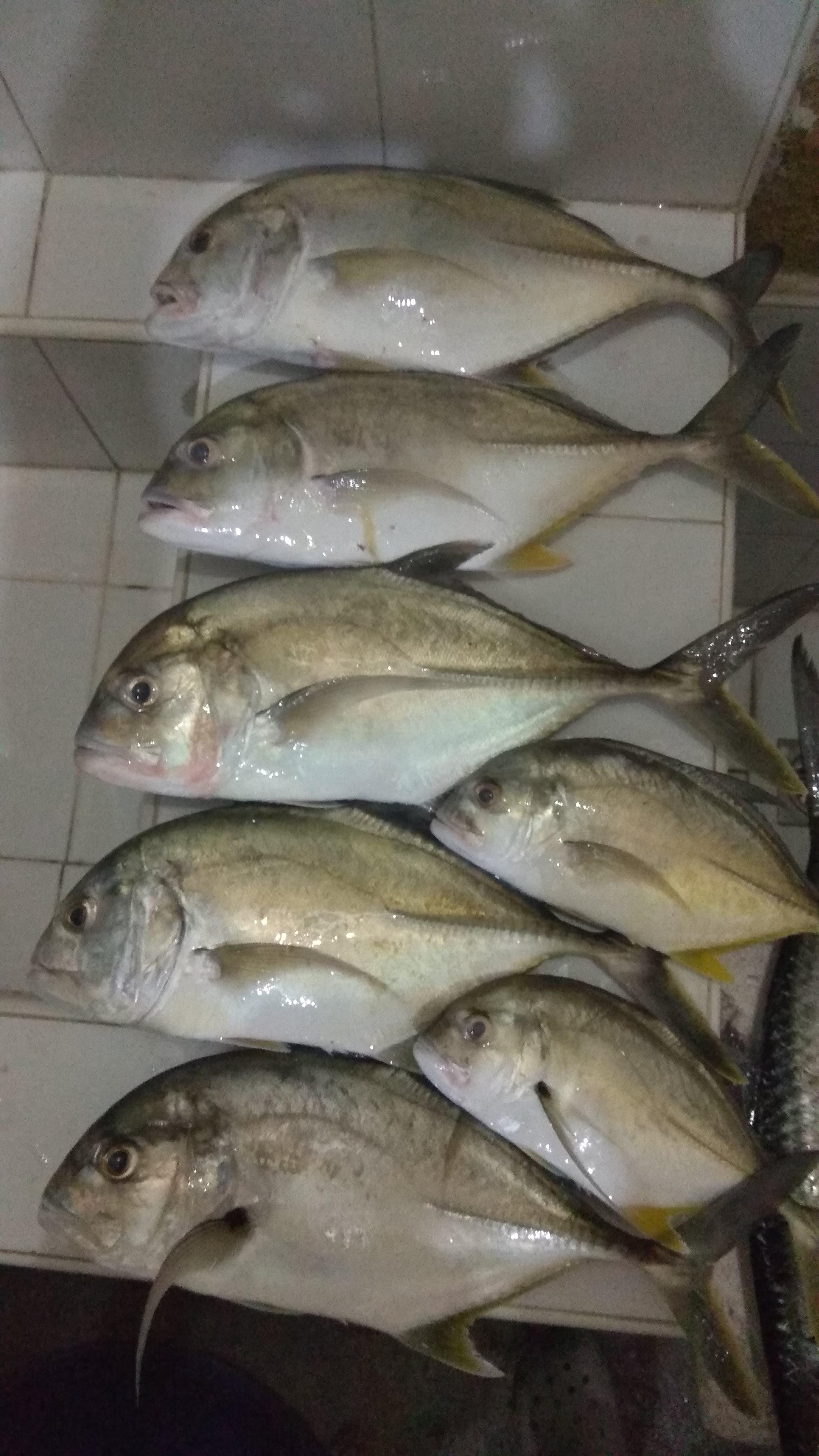 Varas de pescar Carbono Kuying Liderança