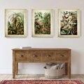 Ernst Haeckel Biologie Poster Palm Baum Drucke Vintage Hummingbird Botanische Tropical Wand Kunst Leinwand Malerei Bilder Decor