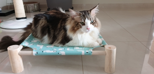 Small Elevated Dog Bed   Raised Dog Bed   Dog Cot Bed photo review